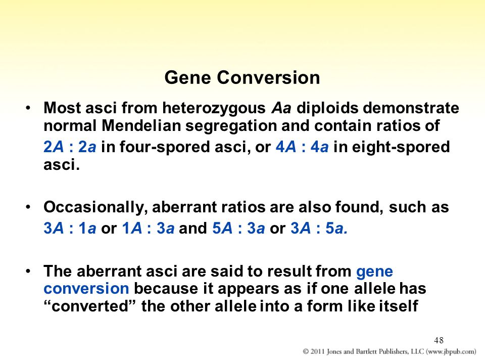 48 Gene Conversion Most asci from heterozygous Aa diploids demonstrate normal Mendelian segregation and contain ratios of 2A : 2a in four-spored asci,