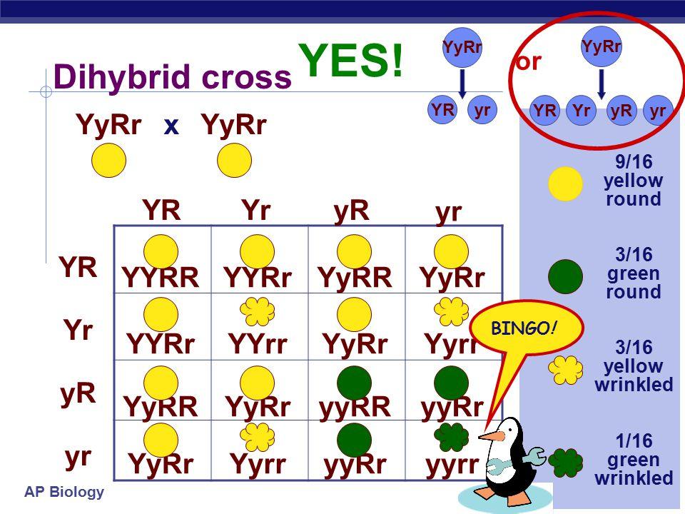 AP Biology Dihybrid cross YyRr YRYryR yr YR Yr yR yr YYRR x YYRrYyRRYyRr YYRrYYrrYyRrYyrr YyRRYyRryyRRyyRr YyRrYyrryyRryyrr 9/16 yellow round 3/16 green round 3/16 yellow wrinkled 1/16 green wrinkled YyRr YryRYR yr YyRr YRyr or BINGO.