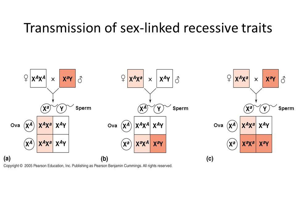 Transmission of sex-linked recessive traits Sperm Ova Sperm Ova Sperm Ova