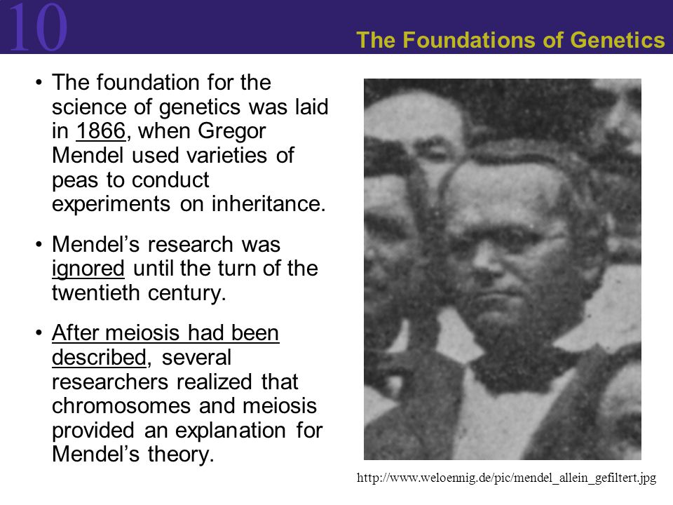 10 Mendel's Experiments and the Laws of Inheritance Because humans cannot be studied using planned crosses, human geneticists rely on pedigrees, which show phenotype segregation in several generations of related individuals.
