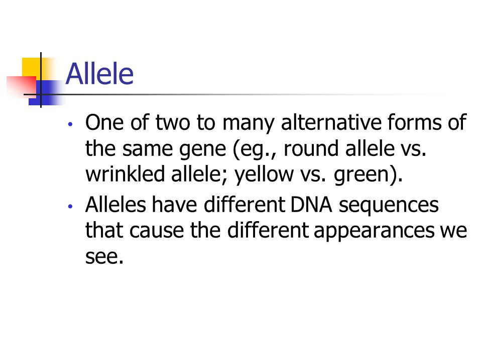 Allele One of two to many alternative forms of the same gene (eg., round allele vs.