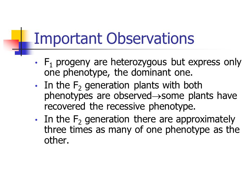 Important Observations F 1 progeny are heterozygous but express only one phenotype, the dominant one.