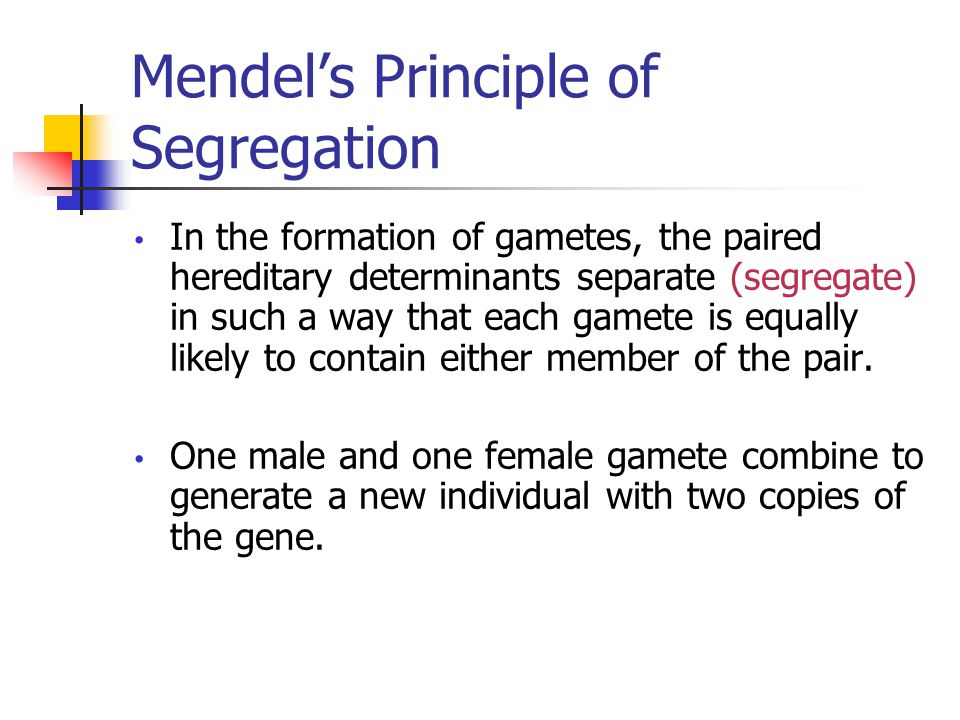 Mendel's Principle of Segregation In the formation of gametes, the paired hereditary determinants separate (segregate) in such a way that each gamete is equally likely to contain either member of the pair.