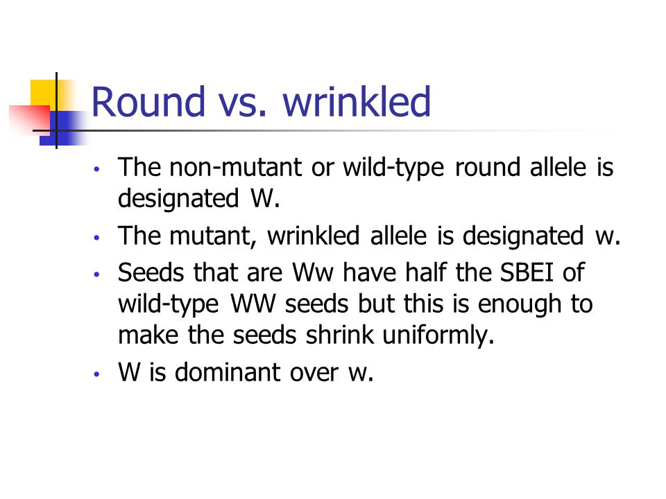 Round vs. wrinkled The non-mutant or wild-type round allele is designated W.