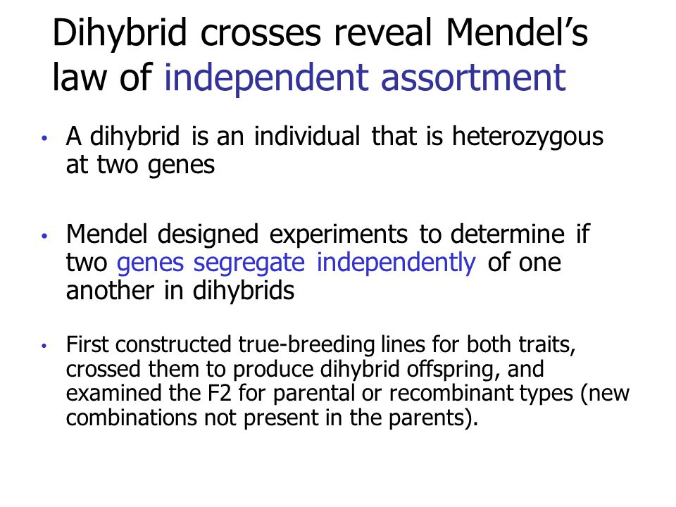 Dihybrid crosses reveal Mendel's law of independent assortment A dihybrid is an individual that is heterozygous at two genes Mendel designed experiments to determine if two genes segregate independently of one another in dihybrids First constructed true-breeding lines for both traits, crossed them to produce dihybrid offspring, and examined the F2 for parental or recombinant types (new combinations not present in the parents).