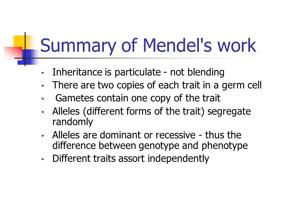 Summary of Mendel s work Inheritance is particulate - not blending There are two copies of each trait in a germ cell Gametes contain one copy of the trait Alleles (different forms of the trait) segregate randomly Alleles are dominant or recessive - thus the difference between genotype and phenotype Different traits assort independently