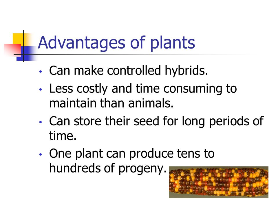 Advantages of plants Can make inbreds in many plant species without severe effects that are typically seen in animals.