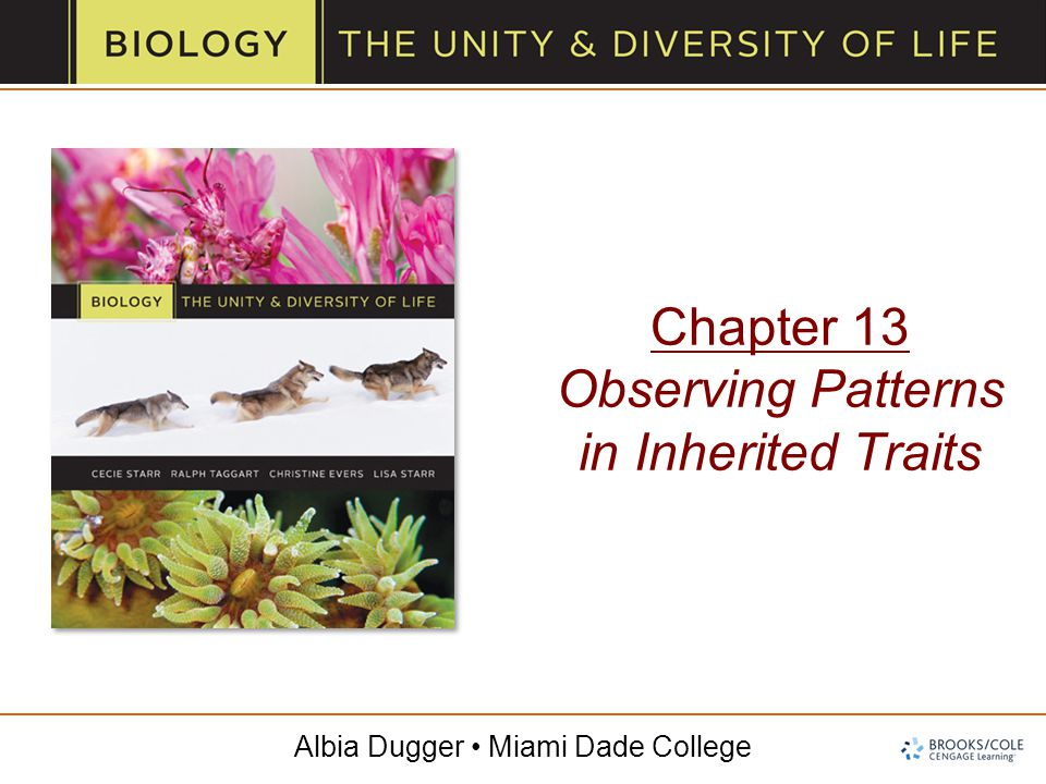 Albia Dugger Miami Dade College Chapter 13 Observing Patterns in Inherited Traits