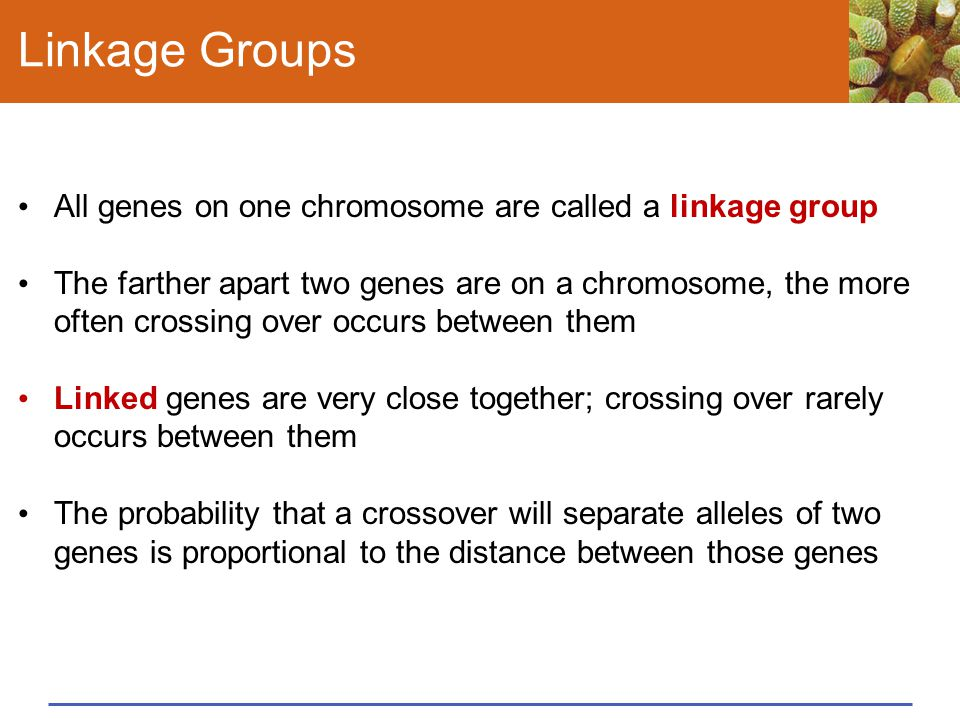 Linkage Groups All genes on one chromosome are called a linkage group The farther apart two genes are on a chromosome, the more often crossing over oc
