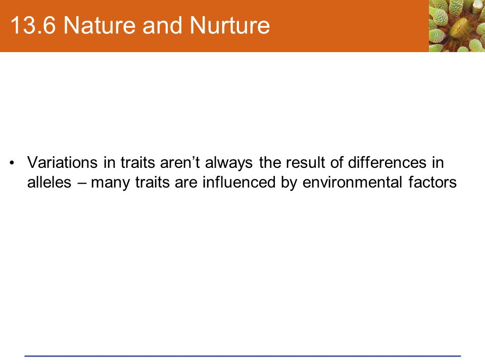 13.6 Nature and Nurture Variations in traits aren't always the result of differences in alleles – many traits are influenced by environmental factors