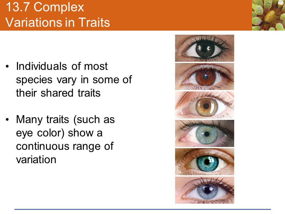 13.7 Complex Variations in Traits Individuals of most species vary in some of their shared traits Many traits (such as eye color) show a continuous ra