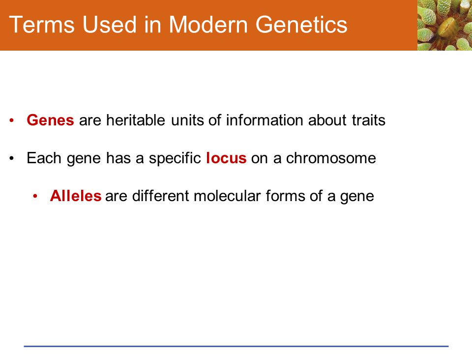 Terms Used in Modern Genetics Genes are heritable units of information about traits Each gene has a specific locus on a chromosome Alleles are differe