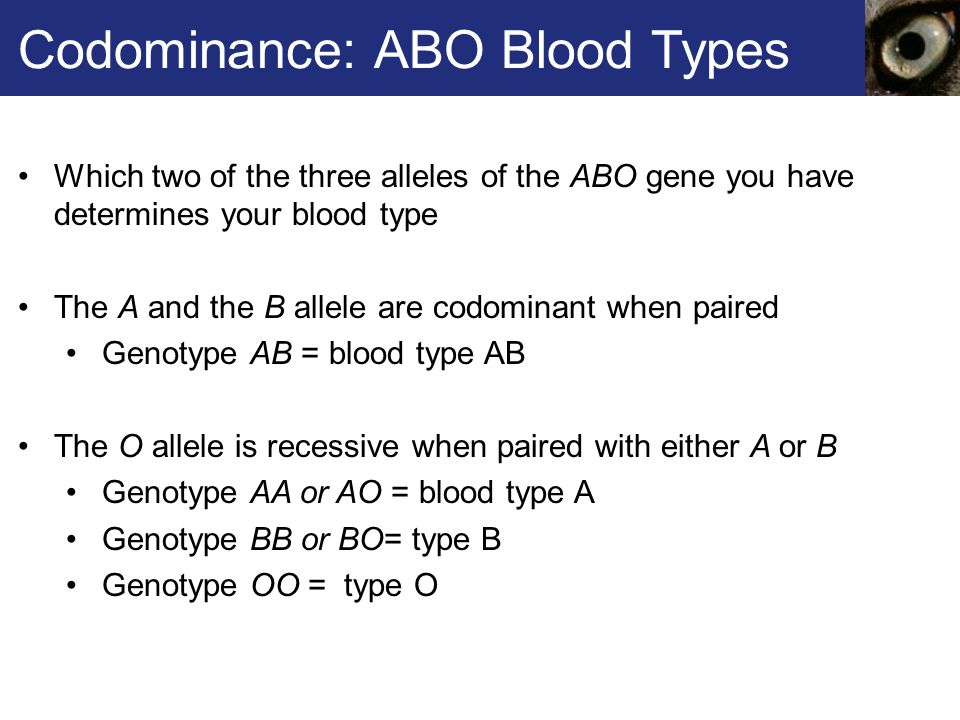 Codominance: ABO Blood Types Which two of the three alleles of the ABO gene you have determines your blood type The A and the B allele are codominant when paired Genotype AB = blood type AB The O allele is recessive when paired with either A or B Genotype AA or AO = blood type A Genotype BB or BO= type B Genotype OO = type O