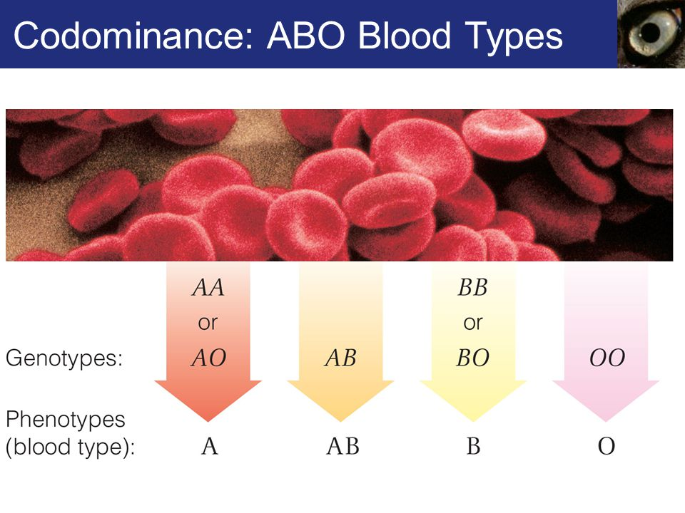 Codominance: ABO Blood Types