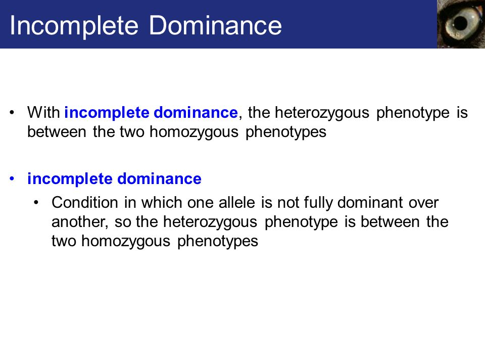 Incomplete Dominance With incomplete dominance, the heterozygous phenotype is between the two homozygous phenotypes incomplete dominance Condition in which one allele is not fully dominant over another, so the heterozygous phenotype is between the two homozygous phenotypes