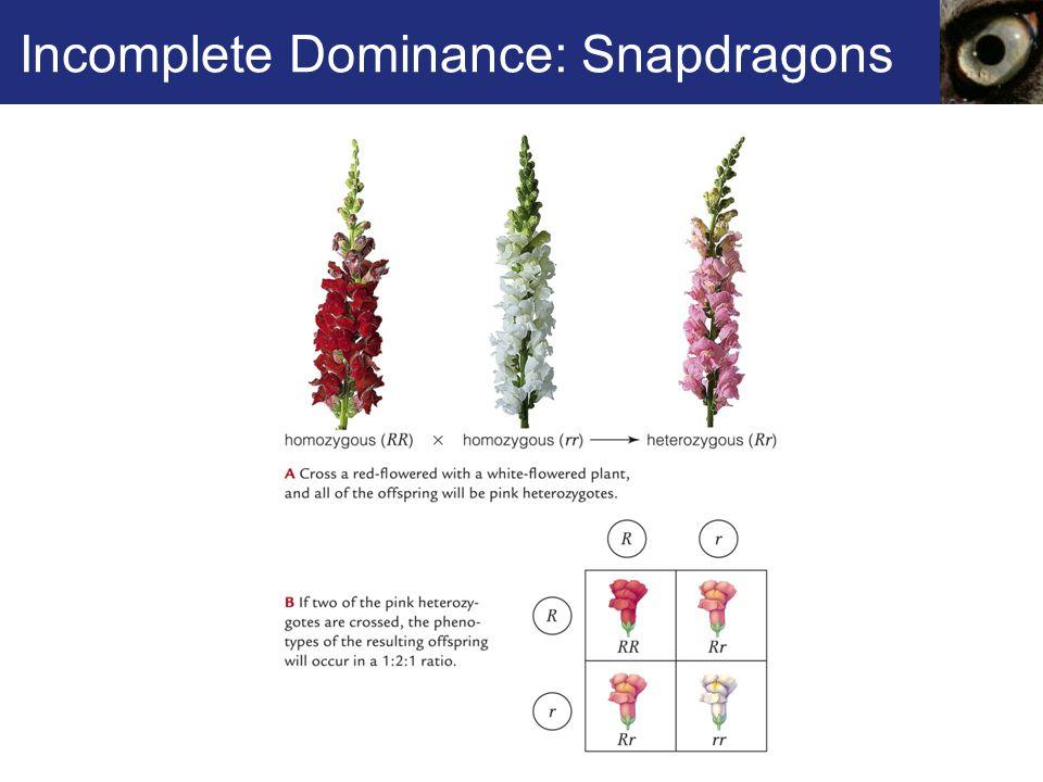 Incomplete Dominance: Snapdragons