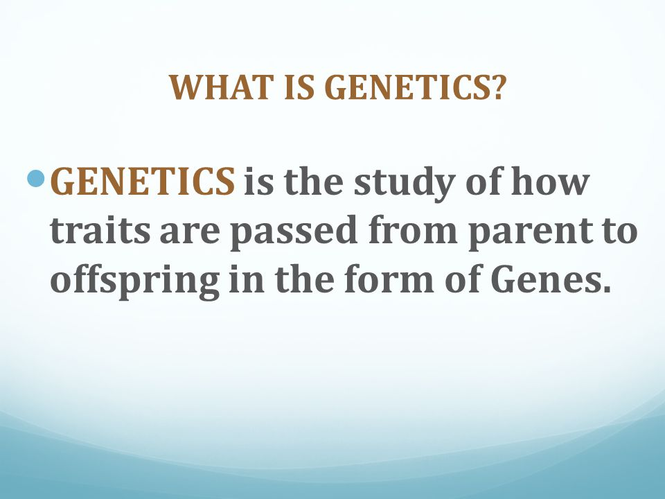 The Traits (genes) Mendel looked at