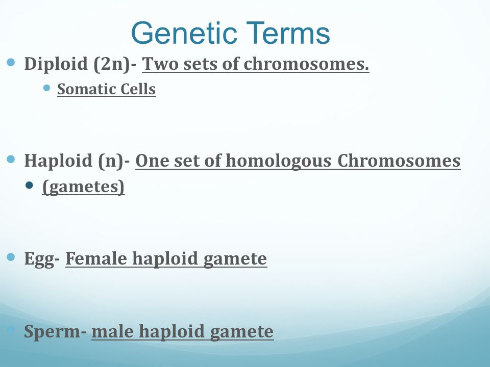 Genetic Terms Diploid (2n)- Two sets of chromosomes. Somatic Cells Haploid (n)- One set of homologous Chromosomes (gametes) Egg- Female haploid gamete