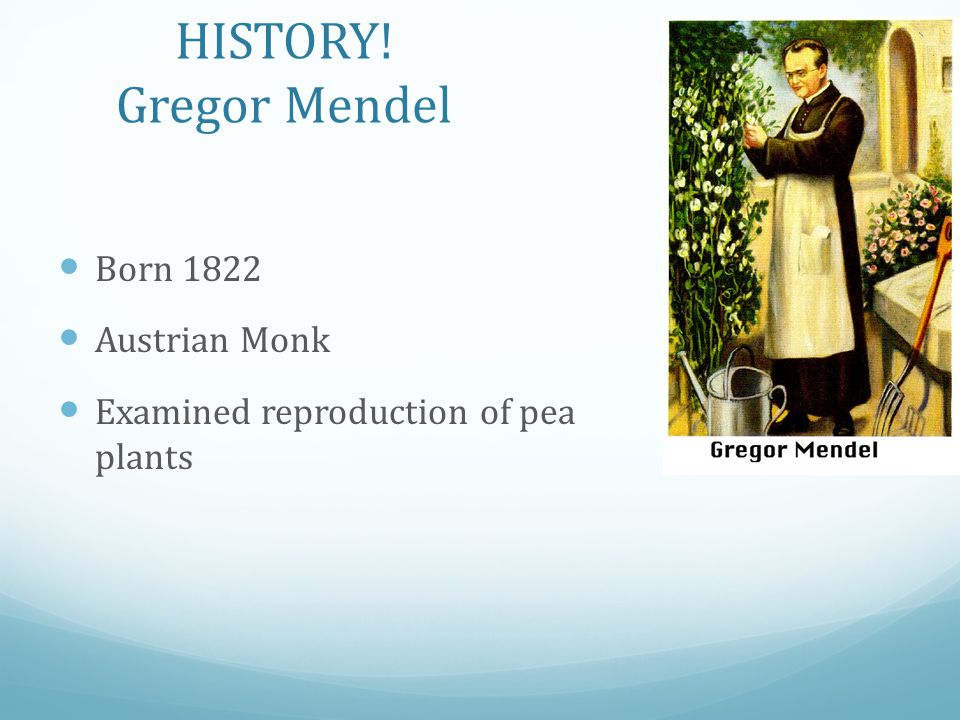 HISTORY! Gregor Mendel Born 1822 Austrian Monk Examined reproduction of pea plants