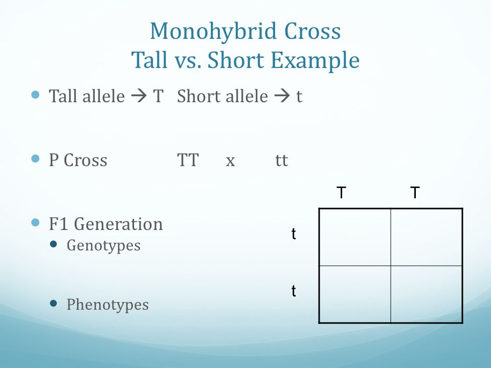 Monohybrid Cross Tall vs. Short Example Tall allele  TShort allele  t P CrossTTxtt F1 Generation Genotypes Phenotypes TT t t