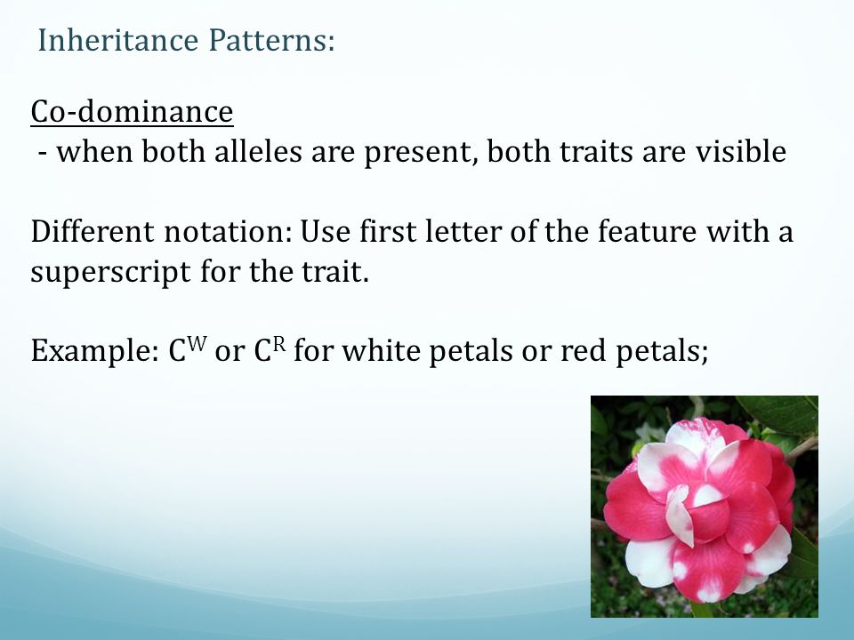 Inheritance Patterns: Co-dominance - when both alleles are present, both traits are visible Different notation: Use first letter of the feature with a