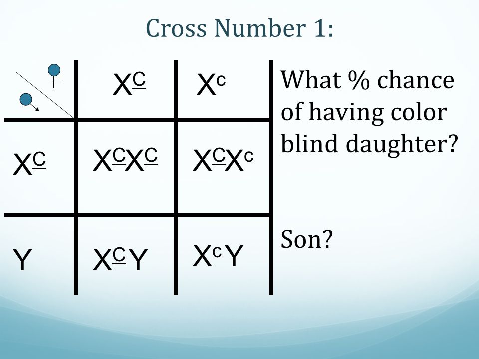 XCXC Cross Number 1: XcXc XCXC Y XCXC XCXC XCXC XcXc XcXc Y XCXC Y What % chance of having color blind daughter? Son?