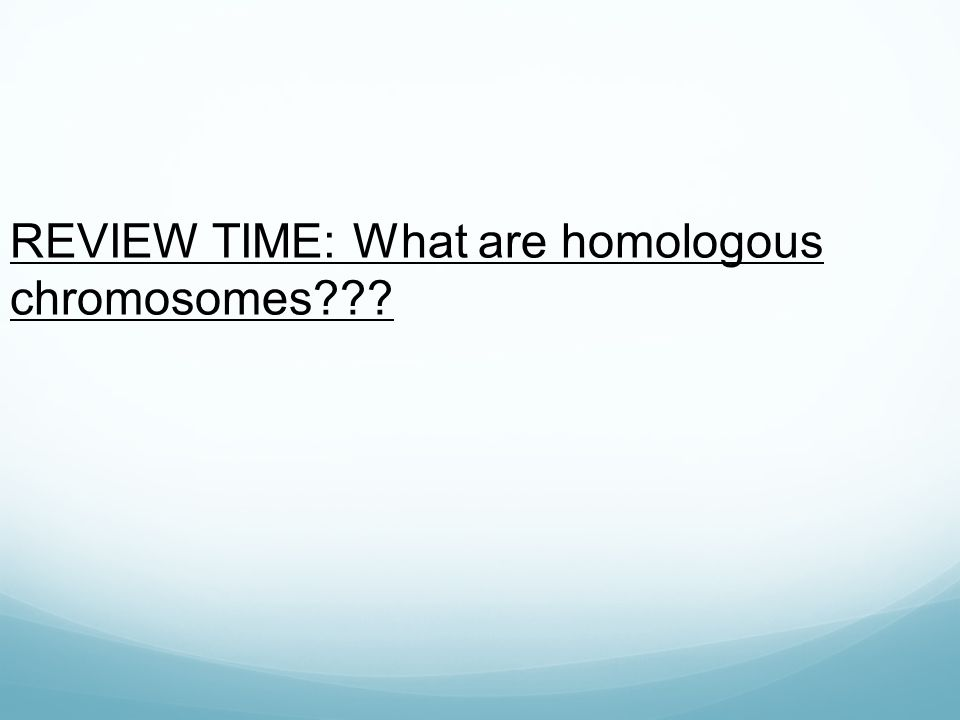 REVIEW TIME: What are homologous chromosomes???