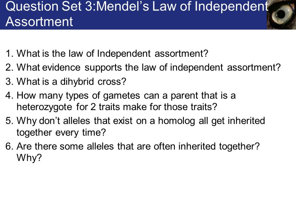 Question Set 3:Mendel's Law of Independent Assortment 1.What is the law of Independent assortment? 2.What evidence supports the law of independent ass
