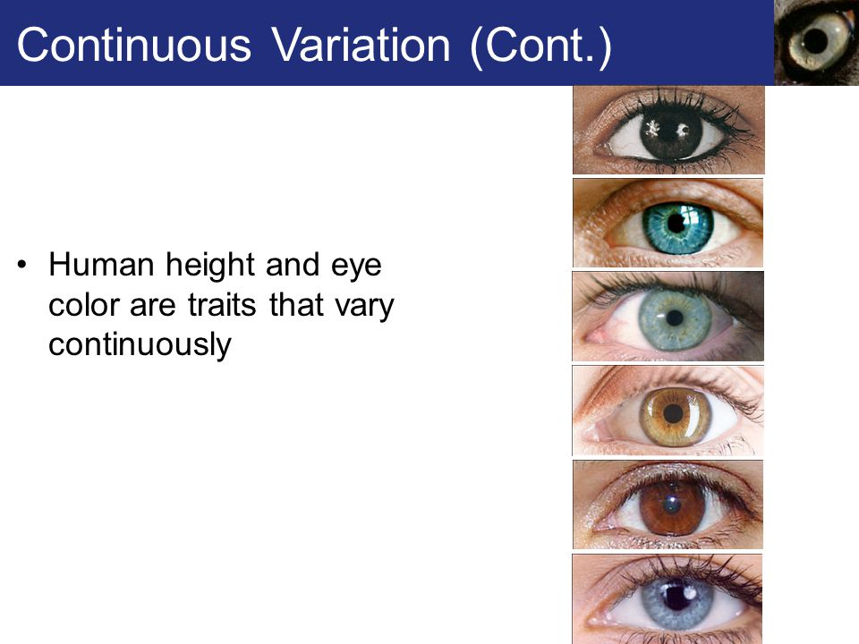 Continuous Variation (Cont.) Human height and eye color are traits that vary continuously