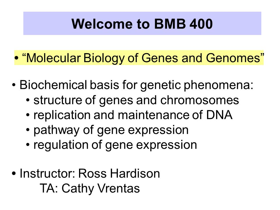 Molecular Biology of Genes and Genomes Biochemical basis for genetic phenomena: structure of genes and chromosomes replication and maintenance of DNA pathway of gene expression regulation of gene expression Instructor: Ross Hardison TA: Cathy Vrentas Welcome to BMB 400