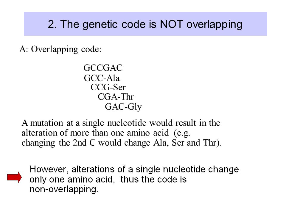 2. The genetic code is NOT overlapping A: Overlapping code: GCCGAC GCC-Ala CCG-Ser CGA-Thr GAC-Gly A mutation at a single nucleotide would result in t