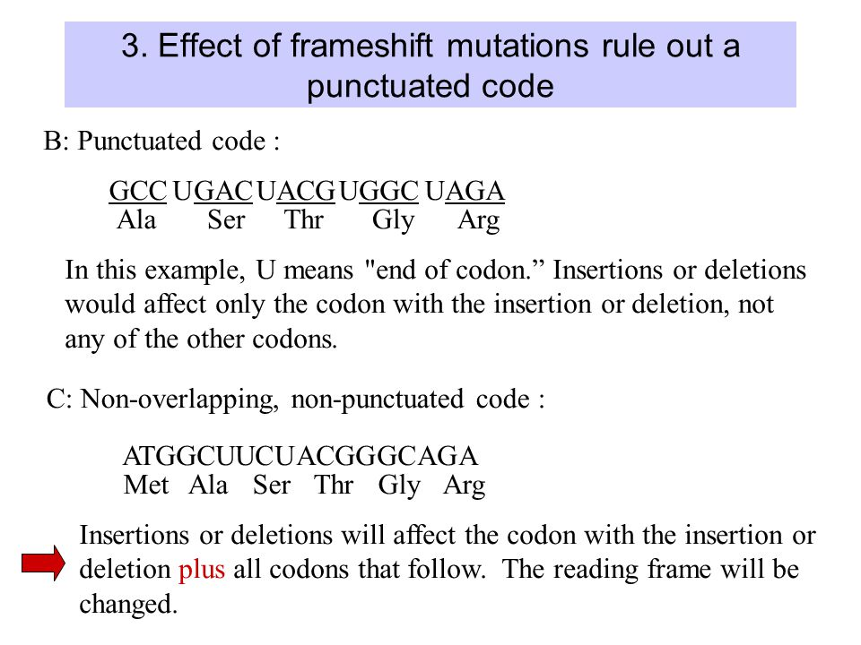 3. Effect of frameshift mutations rule out a punctuated code B: Punctuated code : GCCUGACUACGUGGCUAGA AlaSerThrGlyArg In this example, U means