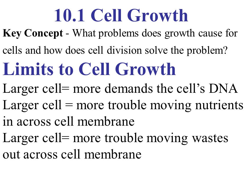 11.4 Meiosis Phases of Meiosis - Meiosis I Interphase I DNA replication, forming duplicate Chromosome s.