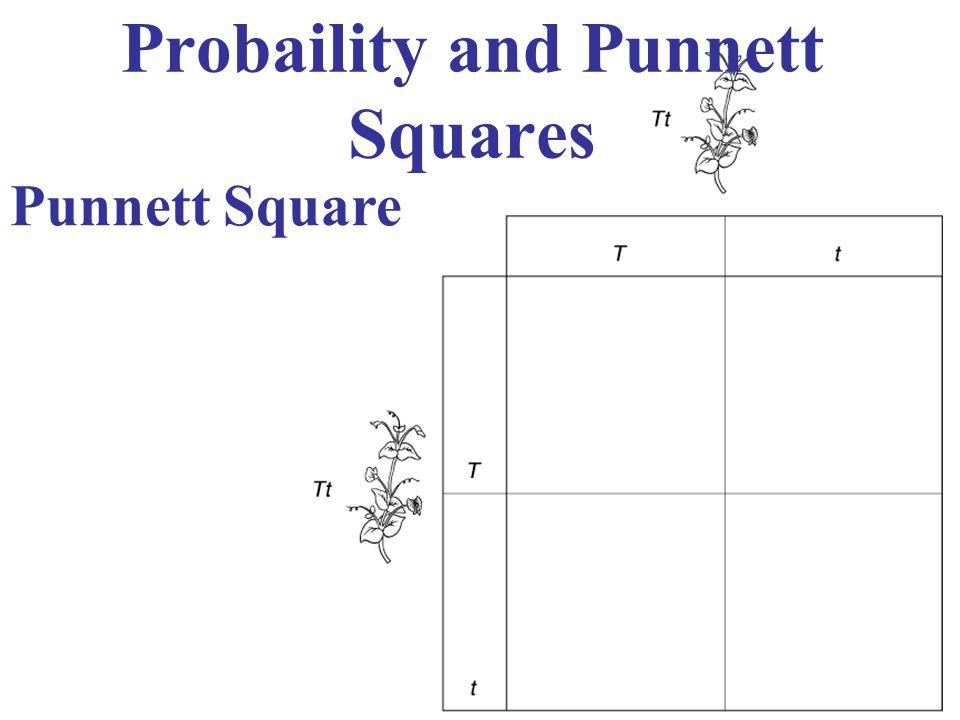 Probaility and Punnett Squares Punnett Square