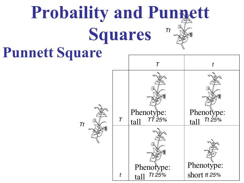 Probaility and Punnett Squares Punnett Square Phenotype: tall Phenotype: short