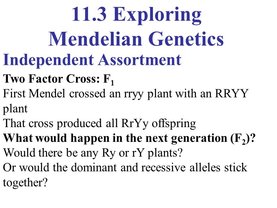 11.3 Exploring Mendelian Genetics Independent Assortment Two Factor Cross: F 1 First Mendel crossed an rryy plant with an RRYY plant That cross produc