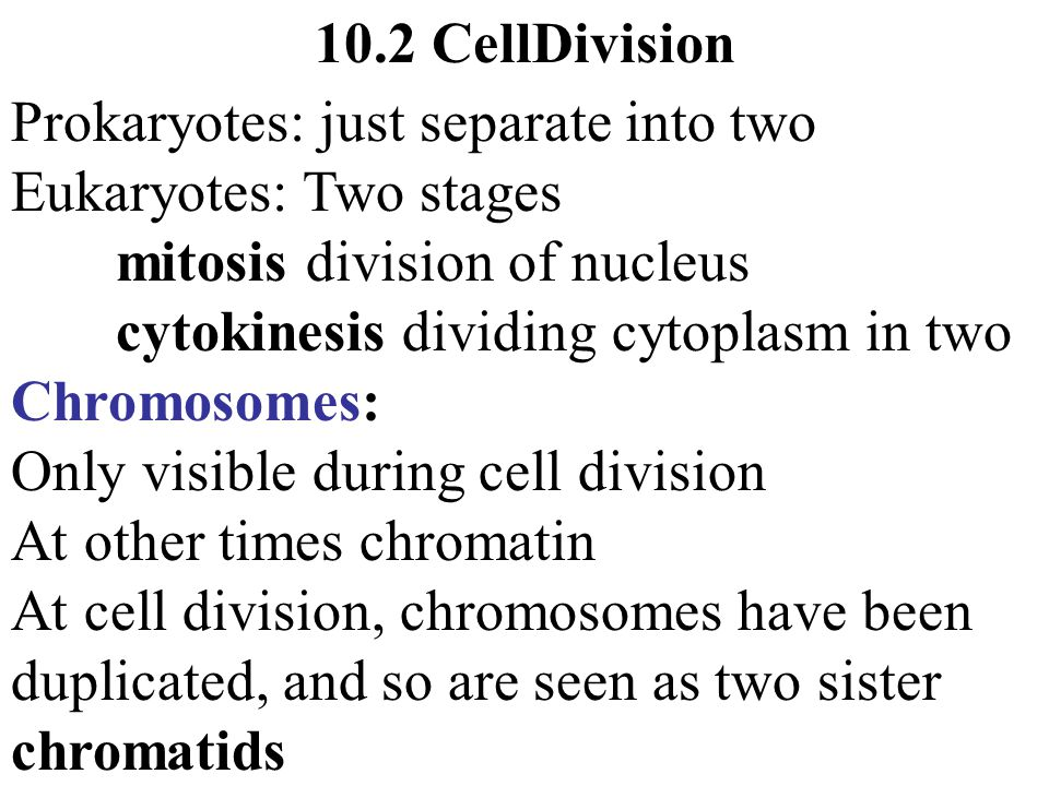 Chromosomes Only visible during cell division At cell division, chromosomes have been duplicated and are seen as two sister chromatids joined at centromere