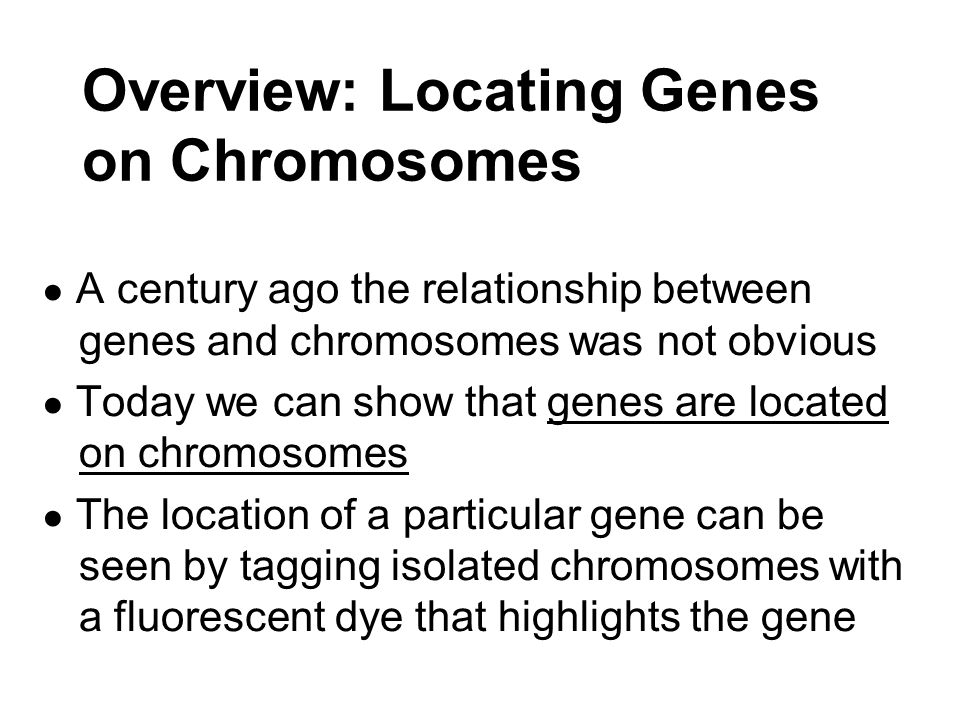 ● Mendelian genes have specific loci (positions) on chromosomes ● It is the chromosomes that undergo segregation and independent assortment.