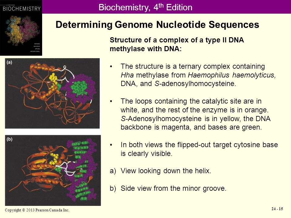 Biochemistry, 4 th Edition Determining Genome Nucleotide Sequences Copyright © 2013 Pearson Canada Inc.
