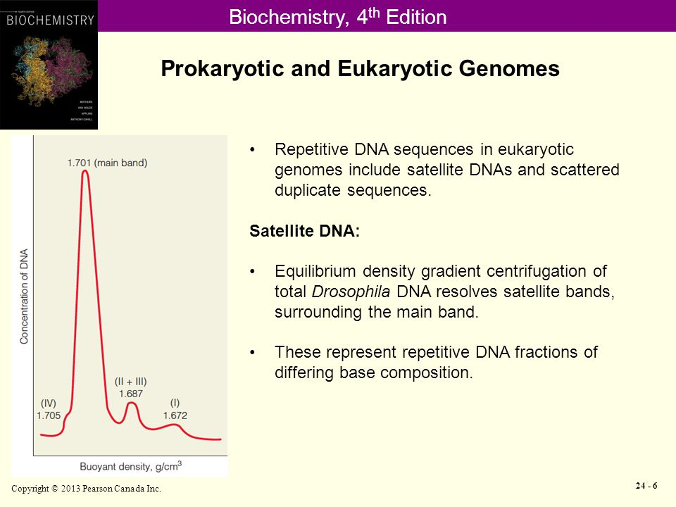 Biochemistry, 4 th Edition Prokaryotic and Eukaryotic Genomes Copyright © 2013 Pearson Canada Inc.