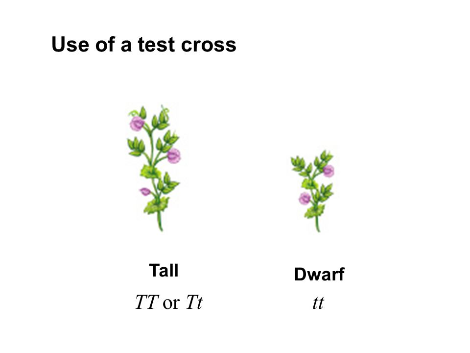 Use of a test cross Tall Dwarf TT or Tt tt