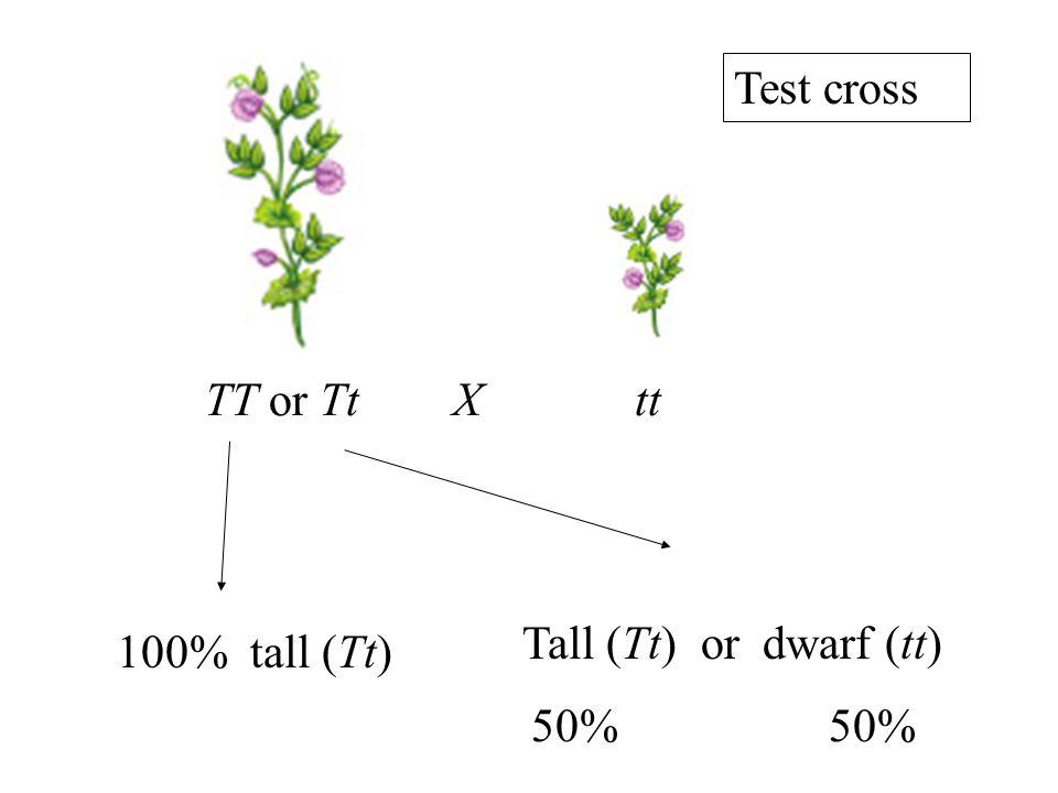 TT or Tt X tt 100% tall (Tt) 50% Tall (Tt) or dwarf (tt) Test cross