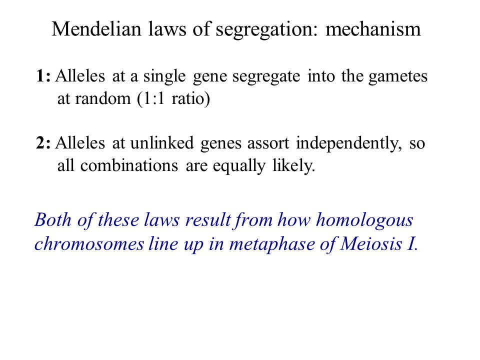 Mendelian laws of segregation: mechanism 1: Alleles at a single gene segregate into the gametes at random (1:1 ratio) 2: Alleles at unlinked genes ass
