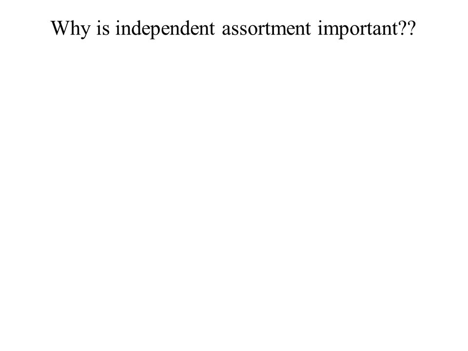 Why is independent assortment important??