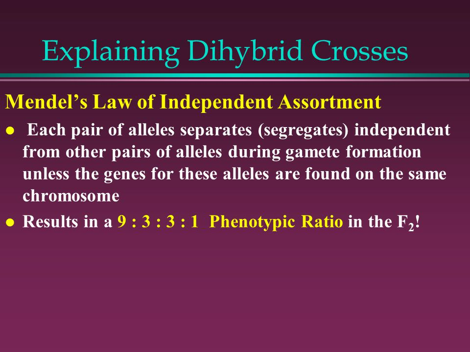 Explaining Dihybrid Crosses Mendel's Law of Independent Assortment l Each pair of alleles separates (segregates) independent from other pairs of alleles during gamete formation unless the genes for these alleles are found on the same chromosome l Results in a 9 : 3 : 3 : 1 Phenotypic Ratio in the F 2 !