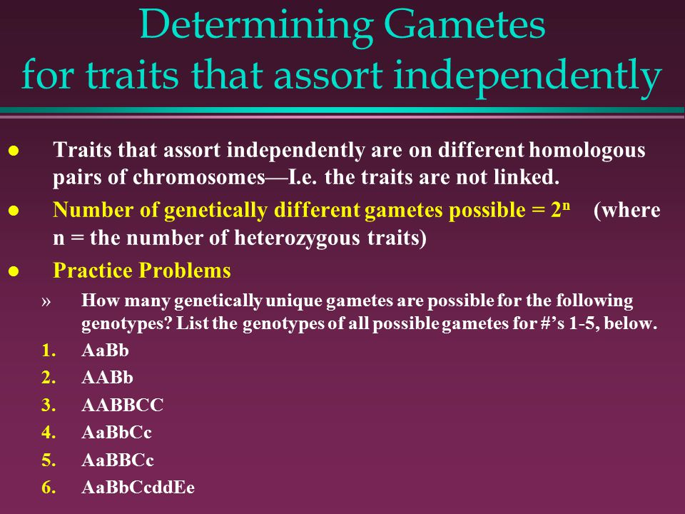 Determining Gametes for traits that assort independently l Traits that assort independently are on different homologous pairs of chromosomes—I.e.