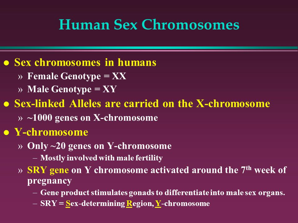 Human Sex Chromosomes l Sex chromosomes in humans »Female Genotype = XX »Male Genotype = XY l Sex-linked Alleles are carried on the X-chromosome »~1000 genes on X-chromosome l Y-chromosome »Only ~20 genes on Y-chromosome –Mostly involved with male fertility »SRY gene on Y chromosome activated around the 7 th week of pregnancy –Gene product stimulates gonads to differentiate into male sex organs.