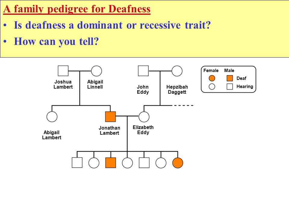A family pedigree for Deafness Is deafness a dominant or recessive trait.