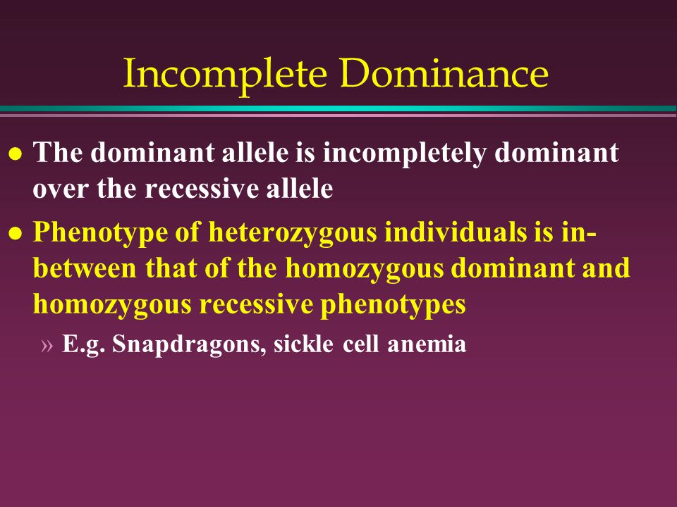 Incomplete Dominance l The dominant allele is incompletely dominant over the recessive allele l Phenotype of heterozygous individuals is in- between that of the homozygous dominant and homozygous recessive phenotypes »E.g.