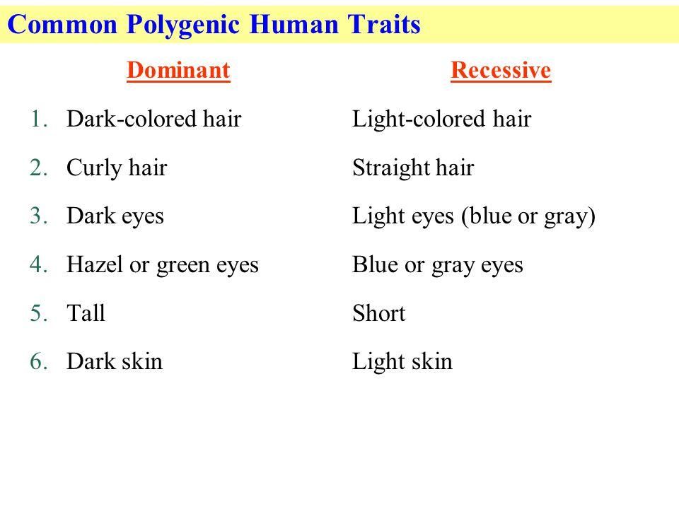 Common Polygenic Human Traits Dominant 1.Dark-colored hair 2.Curly hair 3.Dark eyes 4.Hazel or green eyes 5.Tall 6.Dark skin Recessive Light-colored hair Straight hair Light eyes (blue or gray) Blue or gray eyes Short Light skin